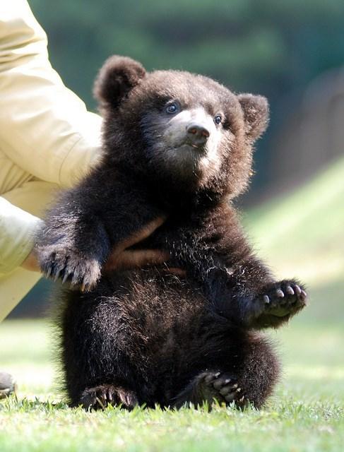 teddy bear baby - 7666883072