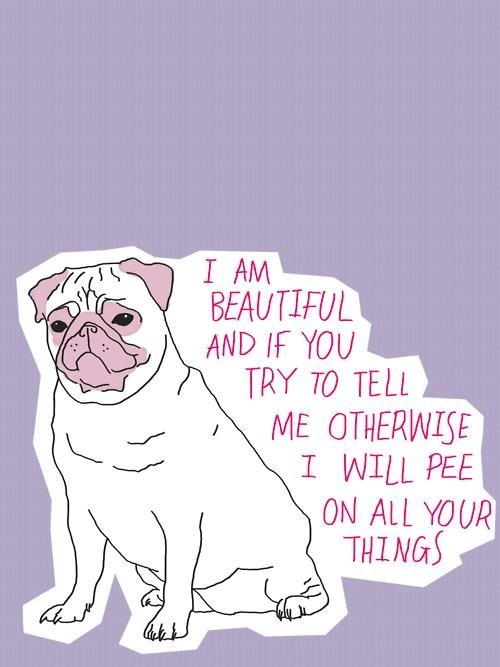 pug,pee,attitude,beauty,funny