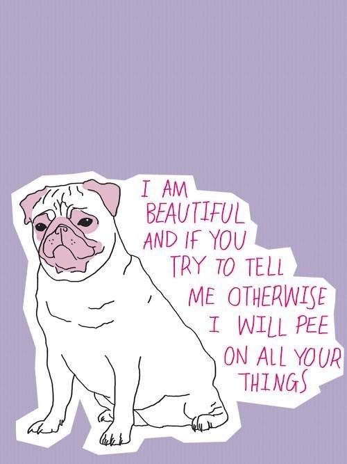 pug pee attitude beauty funny - 7666905088