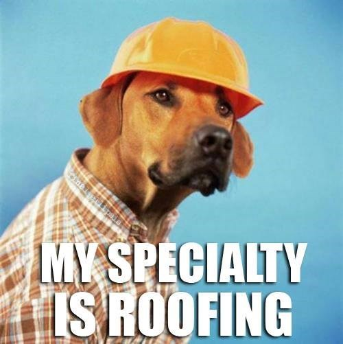 dogs puns roofing funny - 7667163904