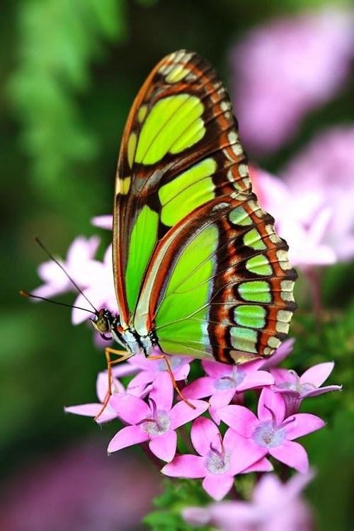 bugs butterfly - 7667192064
