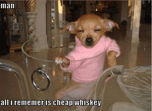 drunk whiskey dogs funny - 7667247104