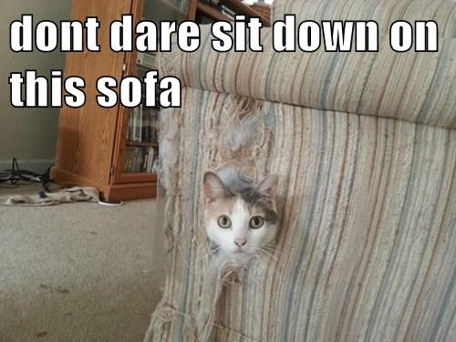 Dont Dare Sit Down On This Sofa Lolcats Lol Cat Memes Funny