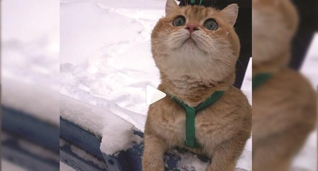 funny cat videos instagram cute cute cats funny cats cat videos Video - 7667461