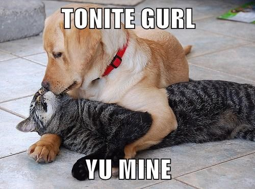 dogs pucker up Cats funny - 7667545600