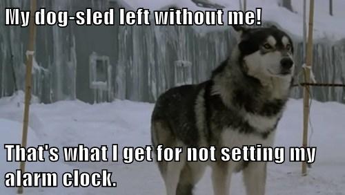 alarm clock wait up funny dogsled - 7667730432