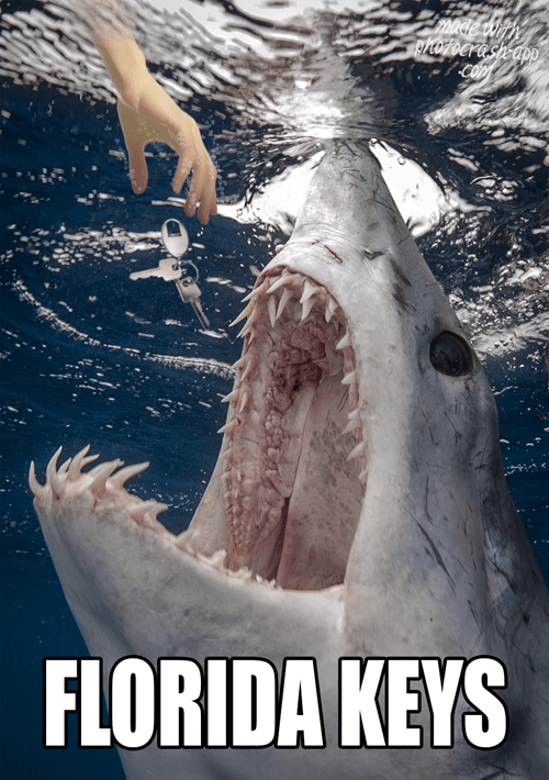 ouch keys scary attack sharks - 7667733760