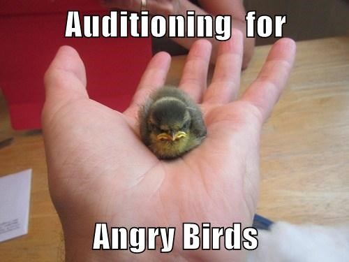 angry birds hand funny - 7667757568