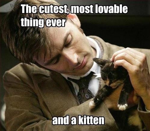 10th doctor cute doctor who Cats - 7667897088