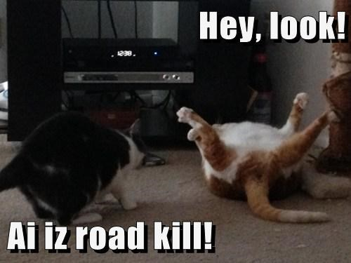 Hey, look!  Ai iz road kill!