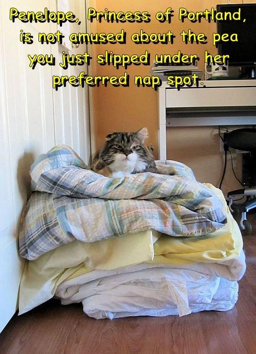 Cheezburger Image 7667941888