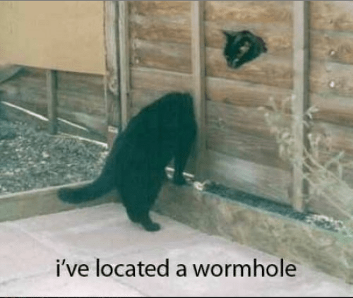 wtf wormhole science Cats funny g rated School of FAIL - 7667947520