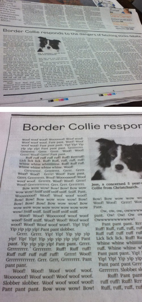 dogs border collie newspaper