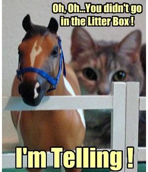 outside the box poo horses Cats funny horse - 7669020160