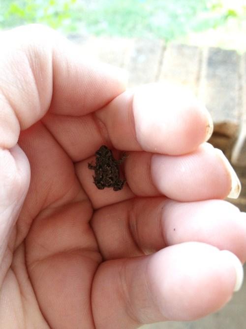tiny frog - 7669838336