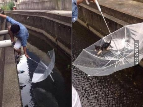 kitten being rescued from drowning with an umbrella