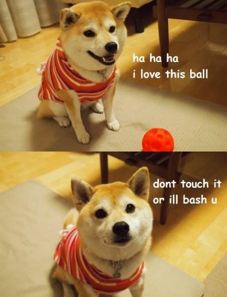 balls dogs doge cute shiba inus funny - 7670028288