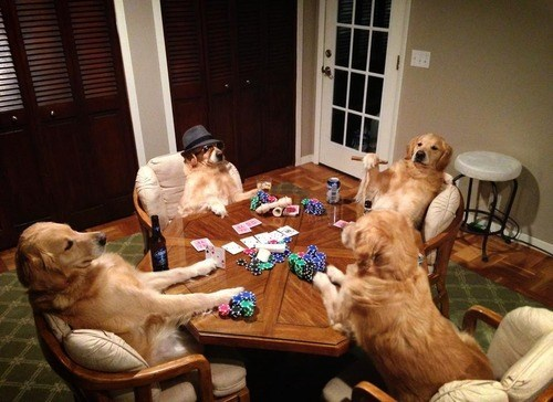 Dogs Playing Poker IRL