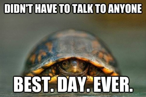shell,turtles,introverts