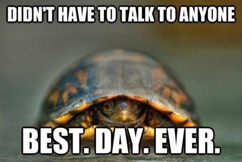 shell turtles - 7670145280