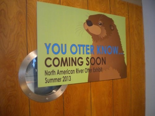 signs puns otters - 7670193408