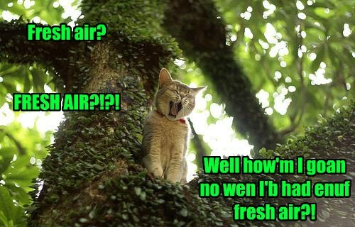 outside tree fresh air funny
