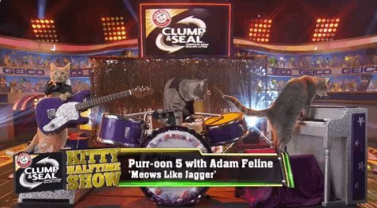 maroon 5 cat cover band performing at the puppy bowl