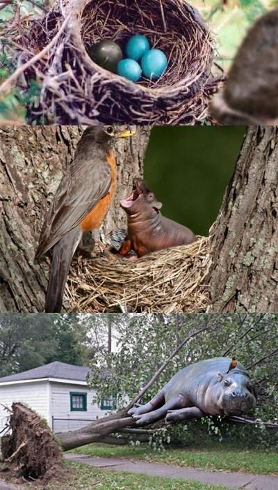 birds life hacks critters funny - 7670305536