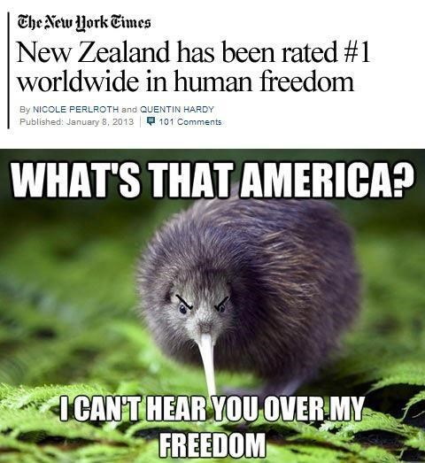 freedom,new zealand,america,sheep,funny