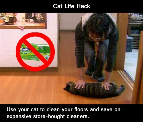 cleaning life hacks Cats animals - 7670487552