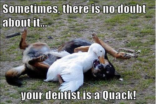 dogs dentist ducks quack funny - 7670689792
