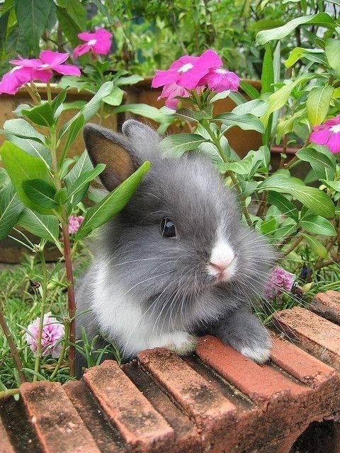 bluegrass garden bunny - 7670849024