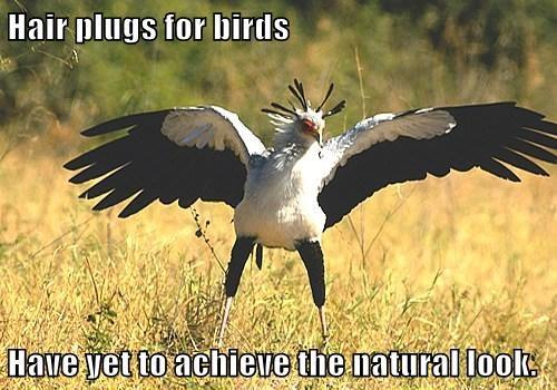 natural birds - 7671032832