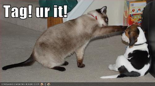 Cats tag funny - 7671633152