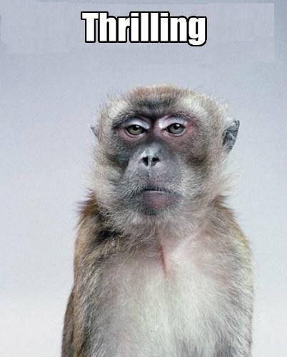 monkey - 7671825408