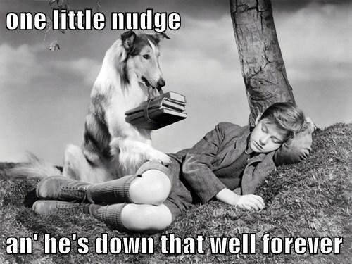 dogs lassie - 7671849984