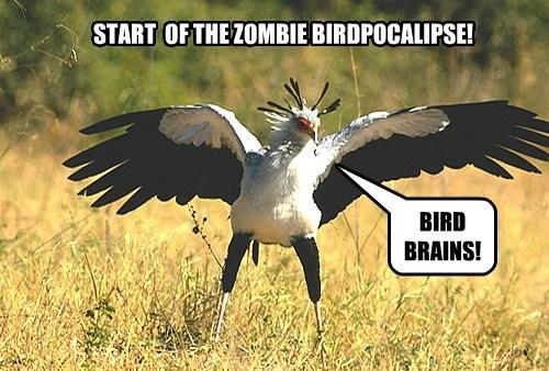 Bird Brain zombie funny - 7671860224