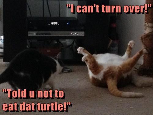 turtle funny regret - 7672161024