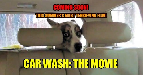 carwash,dogs