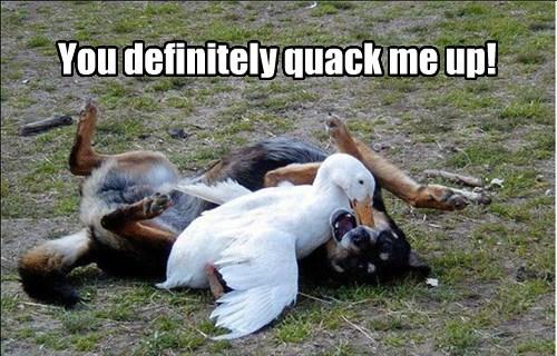 quack joke funny - 7672355072