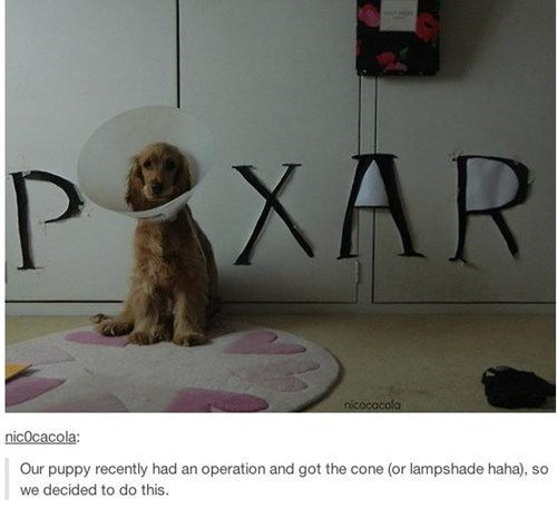 lamp,elizabethan collar,pixar,funny