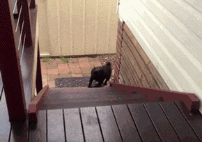 This Dog Has a Funny Way of Going Up the Stairs
