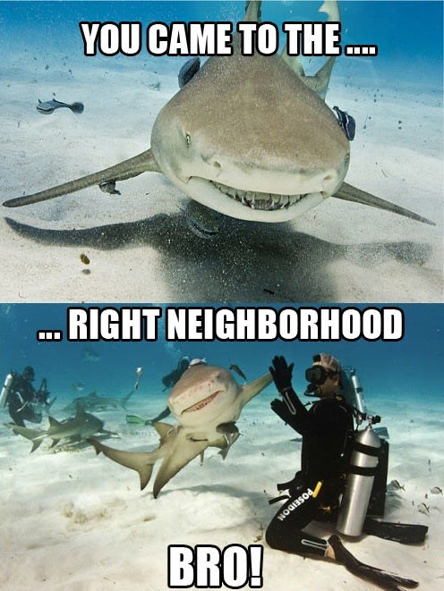 you came to the wrong neighborhood,shark,high five,funny