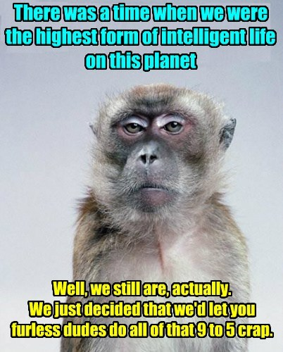 monkeys intelligence nap funny - 7672558336