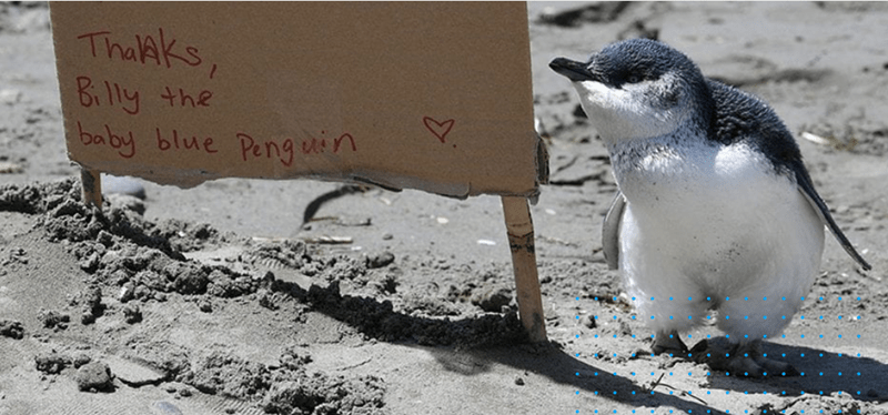baby penguins new zealand beach mommy - 7672581