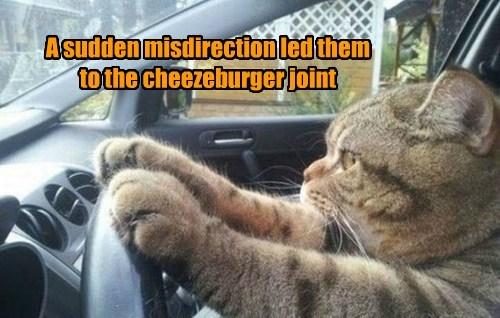 Cheezburger Image 7672753664