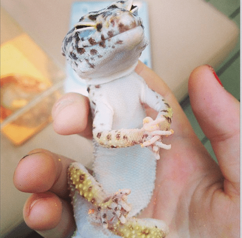 relaxing,aww yiss,lizard
