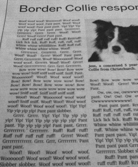dogs funny newspaper