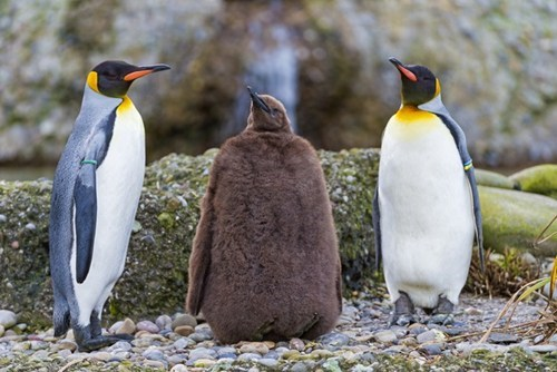 penguin casual friday - 7672920832