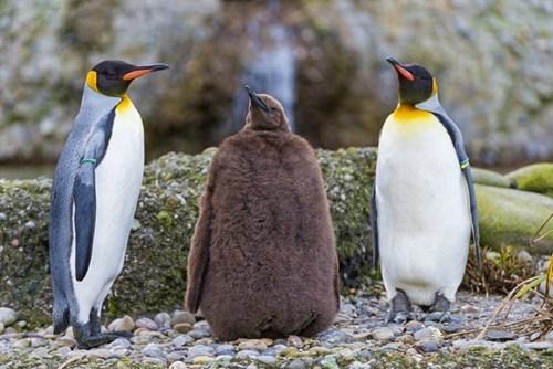 penguin - 7672920832